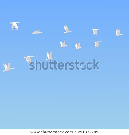 Neve gansos inverno Canadá paisagem pássaro Foto stock © pictureguy