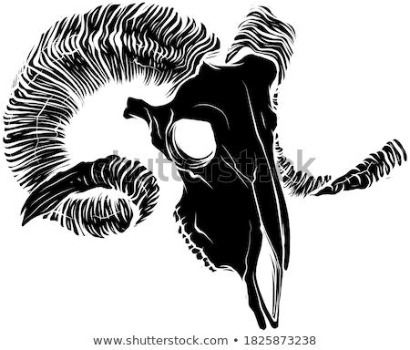 goat skull Stock photo © adrenalina