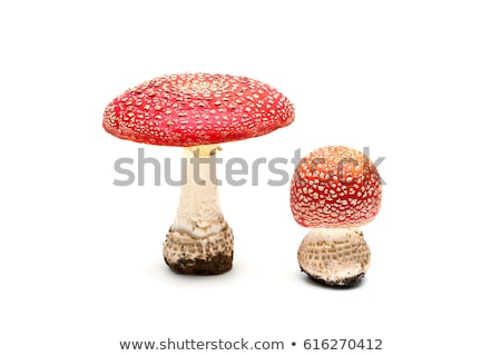 red fungus Stock photo © prill