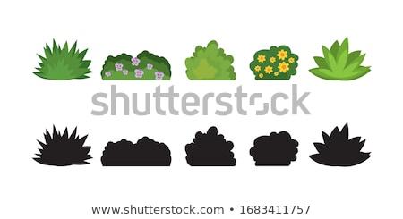 dibujado · a · mano · colorido · ramo · manzanilla · flores · aislado - foto stock © kali