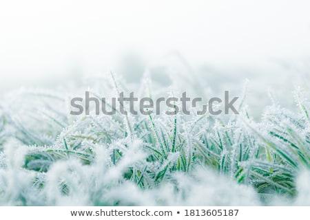 Fagyos fű kert mező zöld ősz Stock fotó © ongap