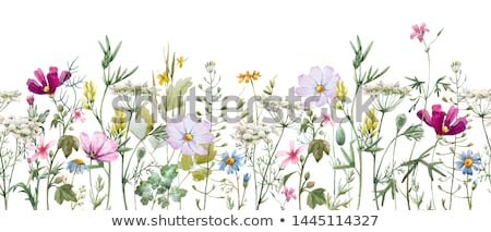 In the wildflowers Stock photo © eleaner