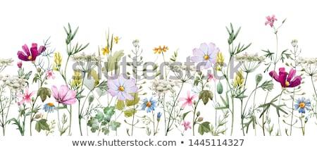Fleurs sauvages fille prairie femme fleur fleurs Photo stock © eleaner