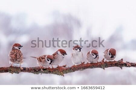 Jovem feminino verão pássaro masculino belo Foto stock © digoarpi