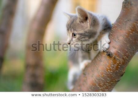 Fluffy grey kitten sitting Stock photo © wavebreak_media