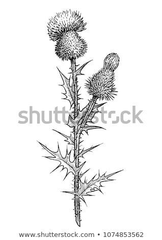 Blossom макроса природы фон завода Сток-фото © brm1949
