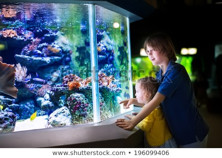 Little siblings looking at fish tank Stock photo © wavebreak_media