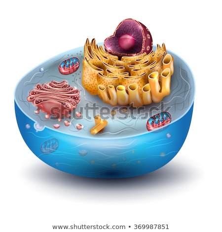 Cell structure, cross section of the cell detailed colorful anat Stock photo © Tefi