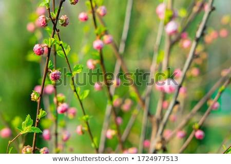 Gartenarbeit Zeit Garten lebendig hellen Frühling Stock foto © JanPietruszka