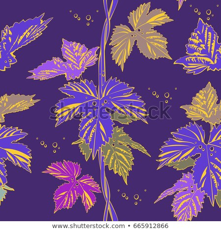 Abstract purple vine liana leaves hops Stock photo © orensila