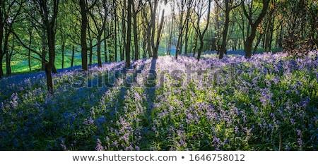 Vad virágok nő virág virágok erdő nap Stock fotó © chris2766