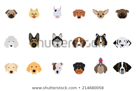 puppy shetland sheepdog and chihuahua Stock photo © cynoclub