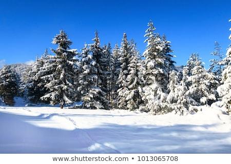 zomer · bomen · heuvel · blauwe · hemel · kleine · groep · jonge - stockfoto © alinamd