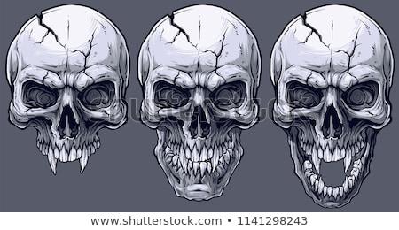 human skull vector illustration stock photo © kariiika