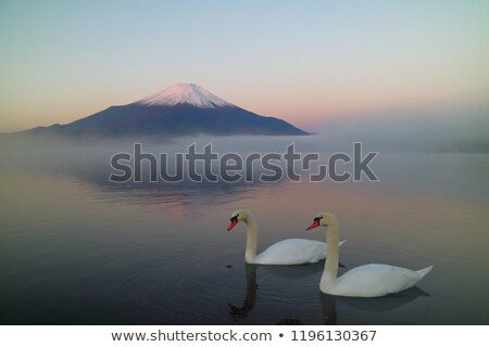 Mount Fuji winter wolken bos Stockfoto © craig