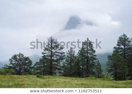 Norvégia völgy turisztikai attrakció felhők erdő tájkép Stock fotó © Kotenko