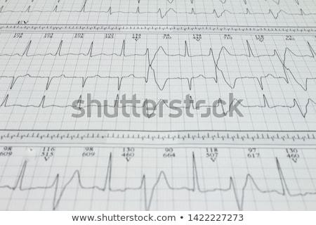 lassú · szív · szívritmus · csiga · kagyló · emberi · anatómia - stock fotó © alexaldo