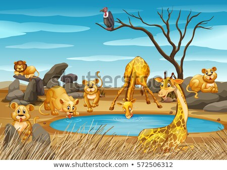 キリン 池 実例 ツリー 自然 風景 ストックフォト © colematt