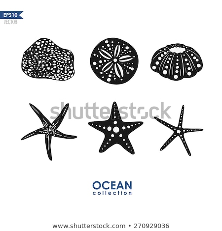 Summer Sea Creature, Tropical Starfish Isolated Stock photo © robuart