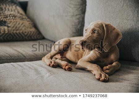 Retrato adorable aislado gris belleza Foto stock © vauvau