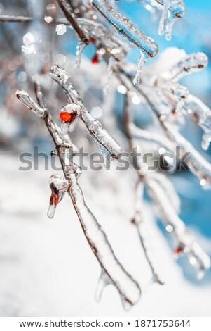 Fényes absztrakt fény terv hó tél Stock fotó © freesoulproduction