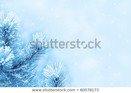 Background of a blue fur-tree Stock photo © boroda