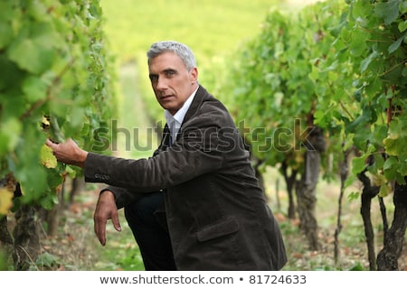 Man crouching down in a vineyard Stock photo © photography33