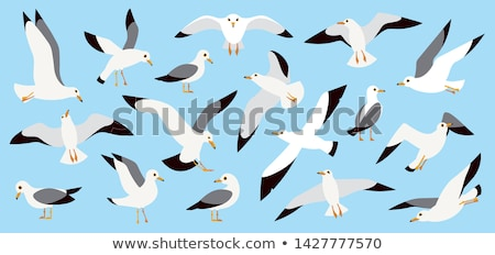 gaivota · voador · acima · água · blue · sky · mar - foto stock © arenacreative