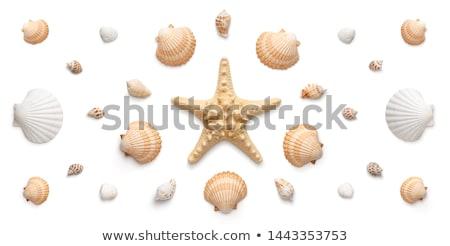 Foto stock: Coleção · conchas · branco · praia · sol · fundo