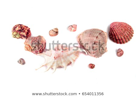 alluvial of Mediterranean seashells Stock photo © vaeenma