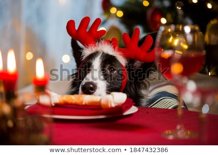 собака · миниатюрный · такса · тиара · белый - Сток-фото © willeecole