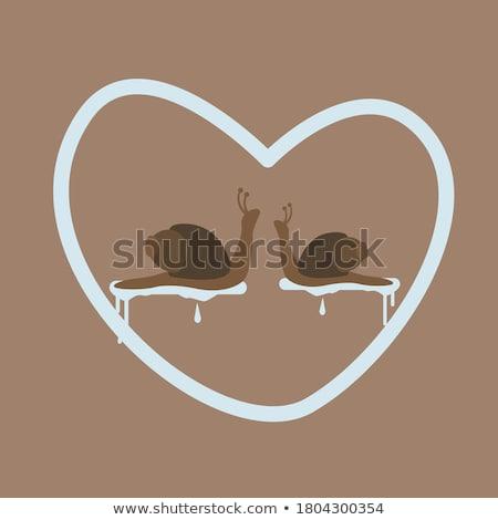amorous snail stock photo © derocz