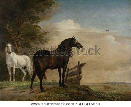 kettő · lovak · legelő · család · nap · természet - stock fotó © philipimage