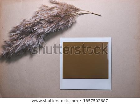 Polaroid keret hét izolált kék papír Stock fotó © cla78