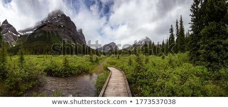 Foto stock: Montanas · senderismo · camino · parque · naturaleza · verde