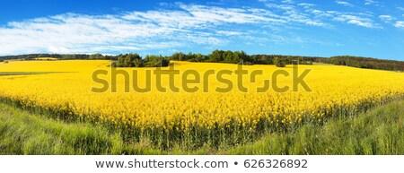 Violación semillas paisaje granja casas Foto stock © ivonnewierink