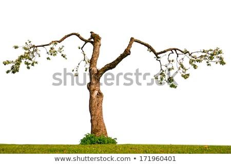 цветок дерево воды мелкий лист пространстве Сток-фото © Phantom1311