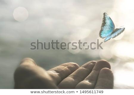 vliegen · shot · tonen · vergadering · bloem · natuur - stockfoto © psychoshadow
