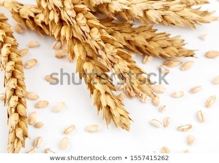 Búza fülek magvak aratás gabonapehely termés Stock fotó © stevanovicigor