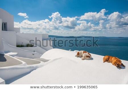 Dog on Santorini island Stock photo © akarelias