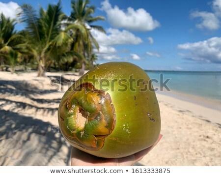 coconut on caribbean beach white sand ripe stock photo © lunamarina
