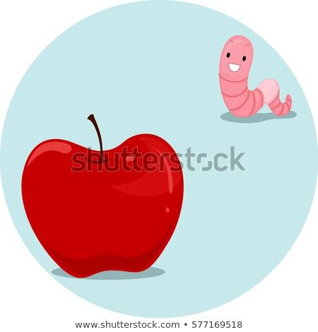 Appel worm ver illustratie regenworm betekenis Stockfoto © lenm