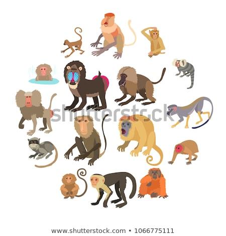 graphique · vecteur · image · heureux · cute · tigre - photo stock © colematt