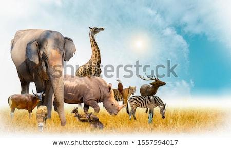 çok vahşi hayvanlar hayvanat bahçesi örnek doğa arka plan Stok fotoğraf © colematt