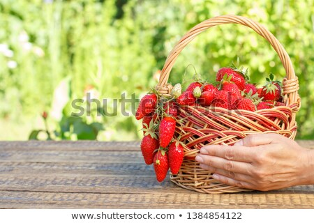 Woman Hands Putting Picked Strawberries Into The Basket Stock photo © AndreyPopov