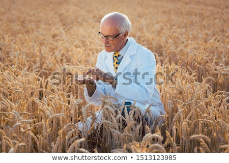 Scientist test new breed of GMO grain Stock photo © Kzenon