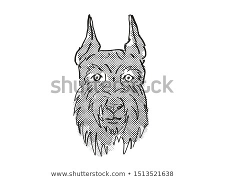 Giant Schnauzer Dog Breed Cartoon Retro Drawing Stock photo © patrimonio