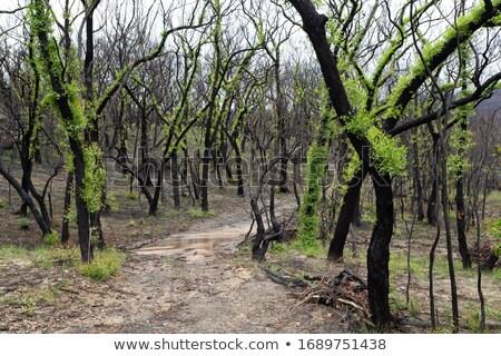 Fofo árvores arbusto seguir folha crescimento Foto stock © lovleah
