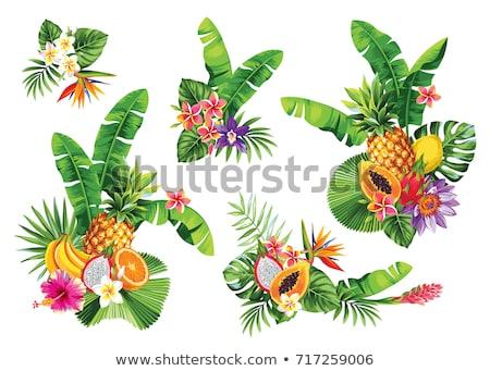Exótico fruto flor olhando indígena banana Foto stock © albund
