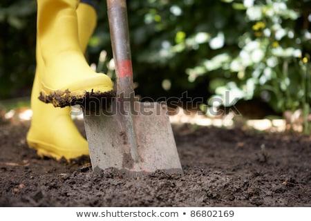 Female gardener with spade Stock photo © photography33
